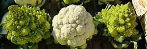 Planter Des Choux Fleurs : que faire au jardin en octobre ~ Melissatoandfro.com Idées de Décoration