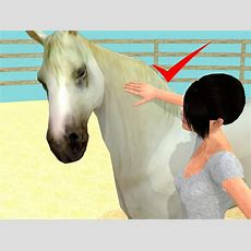 How To Give A Horse A Bath 11 Steps (with Pictures) Wikihow