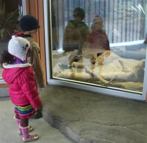 Point Defiance Zoo & Aquarium: FREE Entry Days for Tacoma ...
