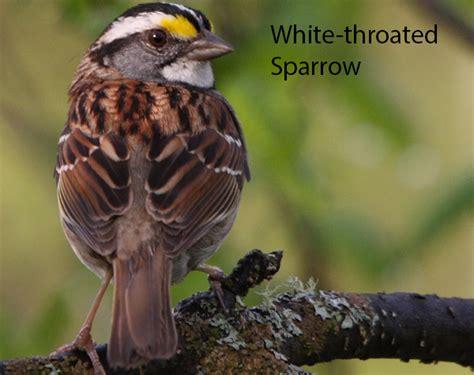 best 28 detroit audubon society audubon great lakes