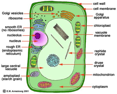 biology cell structure  functions