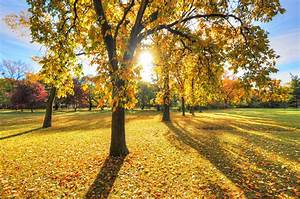 Park, Trees, Grass, Leaves, Autumn, Sunset, Light, Sun, Wallpapers, Hd, Desktop, And, Mobile