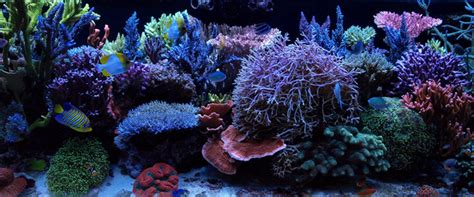 an sps recipe for success reefs