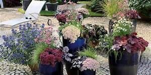 Kübelpflanzen Für Terrasse : herbstzauber das pflanzensortiment f r balkon und terrasse ~ Lizthompson.info Haus und Dekorationen