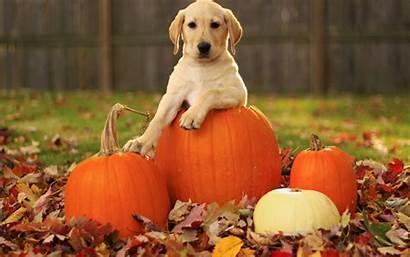 Pumpkin Backgrounds Autumn Wallpapers