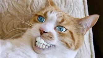 stupid cat best of cats compilation epic stupid cat fails