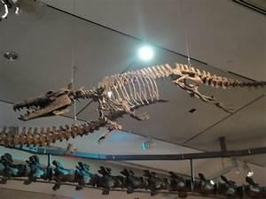 Basilosaurus fossil skeleton | Ginjer Clarke