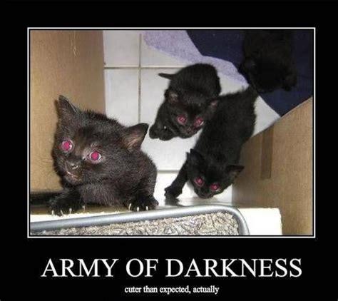 Evil Cat Meme - evil cat funny fail kitten evil cats evil cats bent on global domination pinterest cats