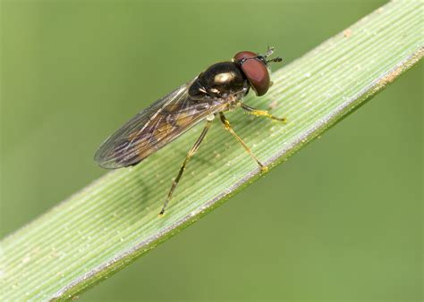 How To Get Rid Of Flies In Your Backyard. How To Get Rid