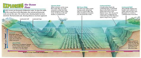 Facts About The Ocean Floor by Oceans And Their Coastal Margins The Geographer Online
