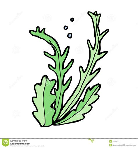 Seaweed Clipart Seaweed Clipart Clipart Panda Free Clipart Images