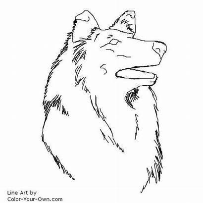 Collie Coloring Border Pages Rough Drawing Dog