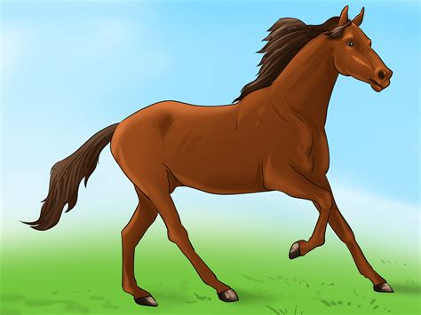 How To Prepare For The Arrival Of A Horse 6 Steps (with