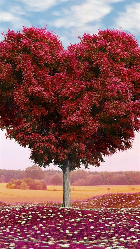 wallpaper love heart tree  love