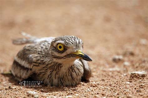 Uccello Simile Al Gabbiano - approfondimenti