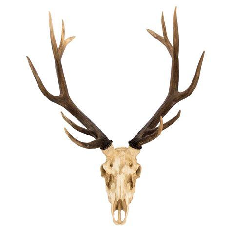yuma rustic lodge reproduction deer skull trophy wall mount sculpture