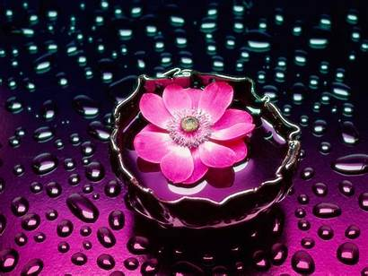 Desktop Flowers 3d Flower Pink Wallpapers Bicycles