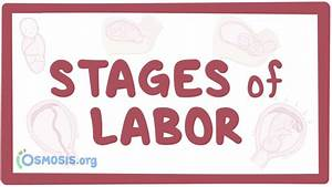 Stages Of Labor  Video  Anatomy  Definition  U0026 Function