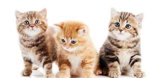 cat symptoms new veterinary hospital 187 feline diseases