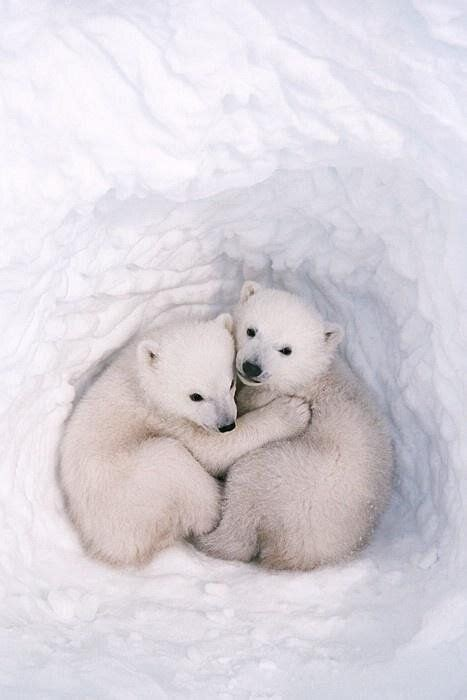 Cuddling A~ So Sweet Cute~~~~~ Cute Animals Baby