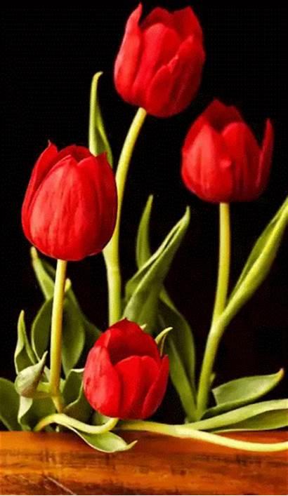 Flores Gifs Frases Mirta Gifshermosos Tulipanes Tulips