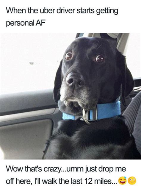 uber rides      animal memes