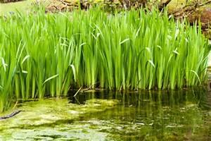 Algen Im Teich Entfernen : algen im teich entfernen so geht es ohne chemie ~ Orissabook.com Haus und Dekorationen