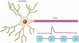 Emulating An Axon    Memristors  Going Active   Nature