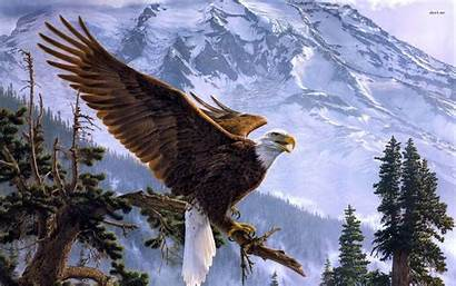 Eagle Bald American 4k Golden Wallpapers Background