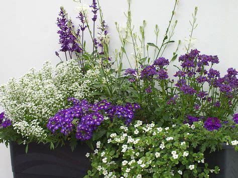 Blumenkästen Bepflanzen Ideen by Balkon Gestaltung Mit Wei 223 En Und Blaun Pflanzen Blumen