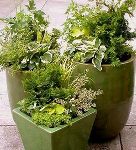 25 trending Winter container gardening ideas on Pinterest