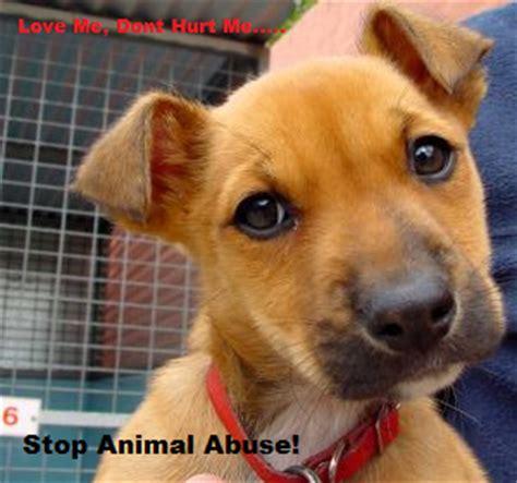 animal abuse prevention sign  kodi  deviantart
