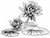 Lily Water Clipart Pad Coloring Drawing Lilies Lilypad Flower Pages Outline Clip Line Pads Draw Printable Cliparts Tattoos Getdrawings Clipground sketch template