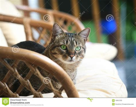 Cat In An Armchair. Stock Image. Image Of Sight, Tender