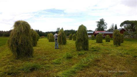 hay horses finnhorse done