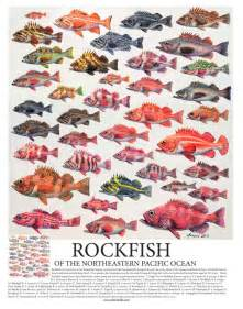 California Rockfish Species