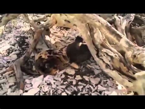 animal planet channel  wild life documentary