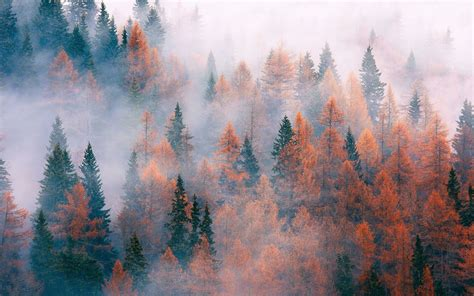 nature aesthetic desktop wallpapers