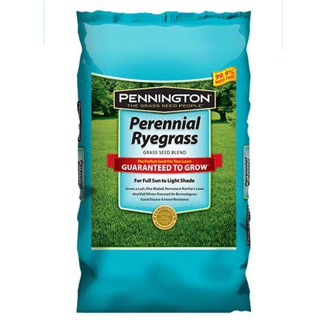 grass seed lawn repair perennial ryegrass grass seed pennington