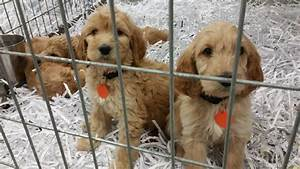 Animal Humane Society Rescues 95 Dogs Living In Unsanitary