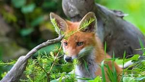 Was Ist Im Februar Im Garten Zu Tun : tiere was zu tun ist wenn wildtiere im privaten garten ~ Lizthompson.info Haus und Dekorationen