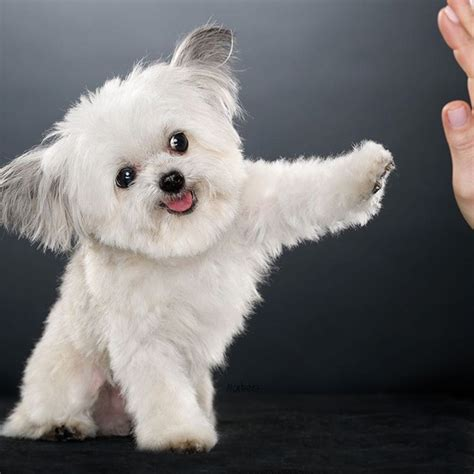 meet norbert  high fiving dog