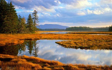 bass harbor marsh acadia national park maine