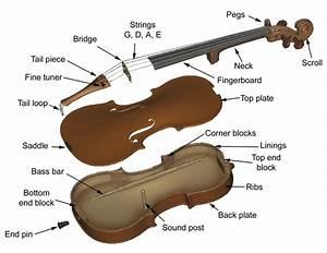1  Parts Of A Violin