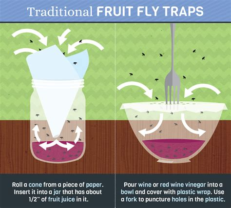 How To Trap House Flies by How To Really Get Rid Of Pesky Fruit Flies Fix