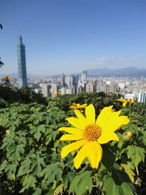 รูปภาพ : ปลูก, สนาม, ดอกไม้, เบ่งบาน, ดอกทานตะวัน, แดด ...