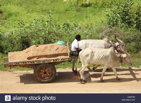indian cart indian farmer with bullock cart andhra pradesh south india