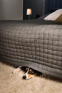 zoetis launches product for noise anxiety in dogs vet times With dog beds under 10