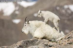 """Learning To Climb - Mountain Goat"" - Open Editions - Best ..."