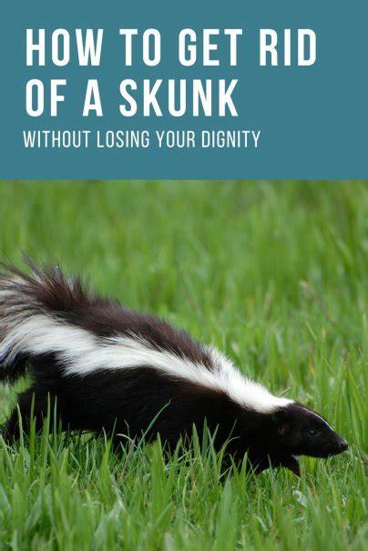 How Do You Get Rid Of Skunks In Your Backyard  Outdoor Goods